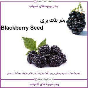 بذر بلک بری Blackberry seed | فروش بذر های کمیاب | فروشگاه بذر کمیاب | بذر بلکبری | بذر فروش تهران | بذر میوه کمیاب بلک بری | کاشت بذر بلک بری BLACKBERRY | خاک بذر کمیاب | کاشت بذر کمیاب | بذر لینک تری | لینک تری | قیمت بذر بلک بری